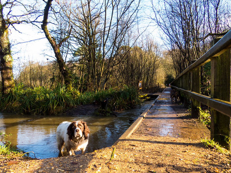 Max stands patiently by the stream
