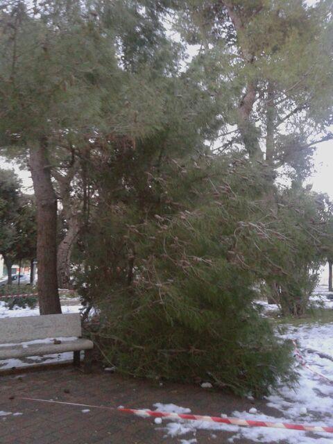 Turi - albero caduto