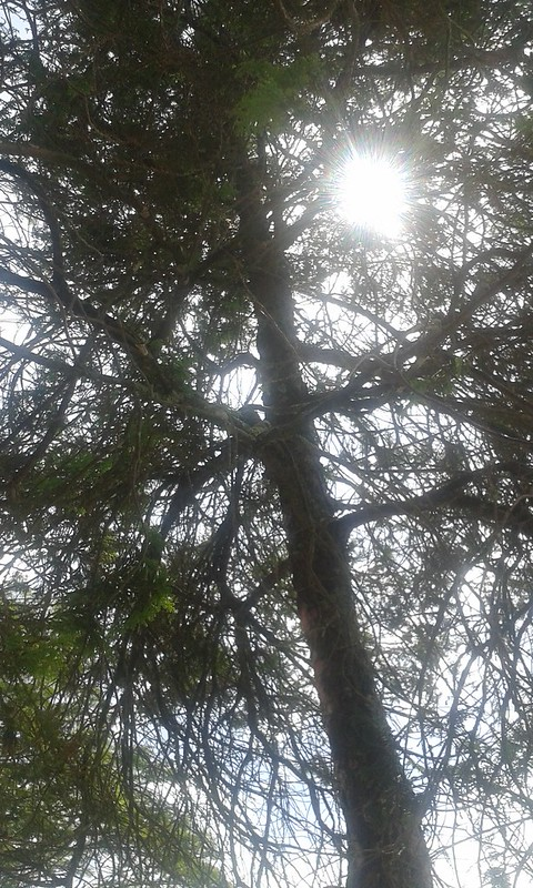 Tree sunshine