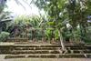 Jungle ruin by mfeingol