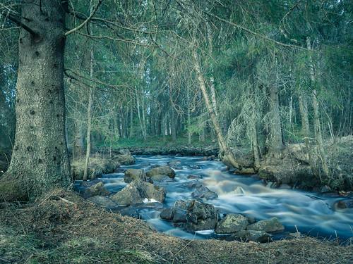 old nature water creek forest finland river evening spring rocks may spruce rapid raahe pattijoki ylipää lasikangas pihlajakankaantie