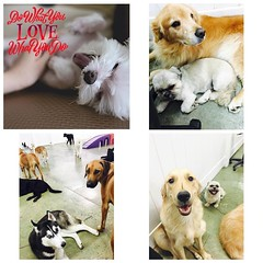 We do love what we do ❤️❤️❤️ #beautifulfurrybabies #doggiedaycare #camarillo #venturacounty #ventura #805 #petfamily