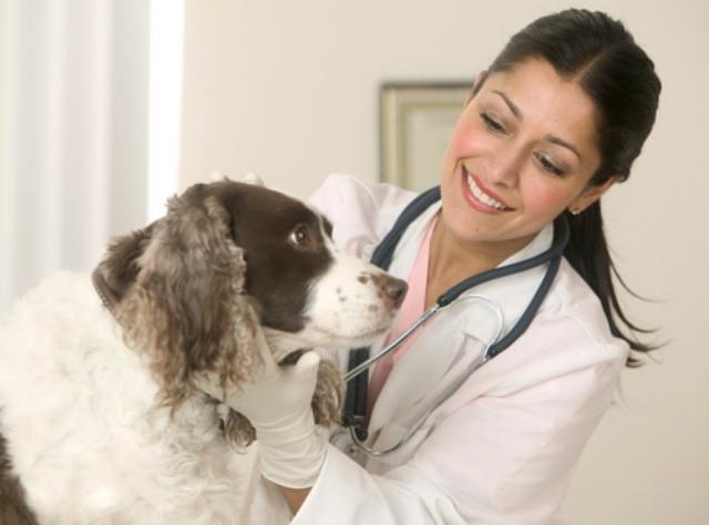 medico curando al perro de parvovirus