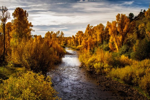 morning autumn trees fallleaves fall water clouds creek river morninglight stream autumnleaves
