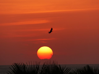 Sunset. The Gambia