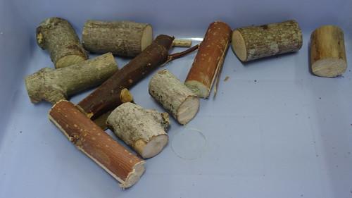 觀察木材竹筷03