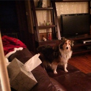 Cheese please! #Maggie #puppymilldog