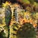 Cactus Vibes - Tucson, AZ