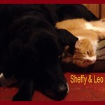 Sheffy and Leo
