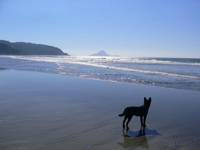 Dog in Tauranga