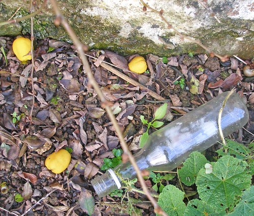 Chaenomeles fruit and bottle