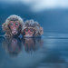 Cheeky Juvenile Snow Monkeys by torode