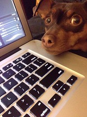 """""""Are you sure about that edit, dad?"""" Says the look @sprocketminpin is giving me."""