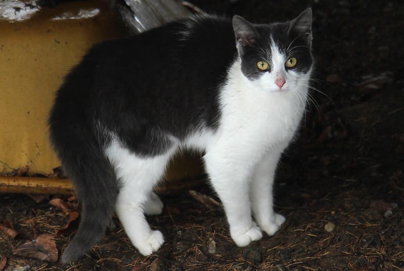 found kitty2