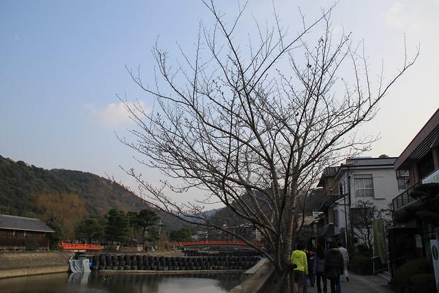 河堤小徑 - 冬樹