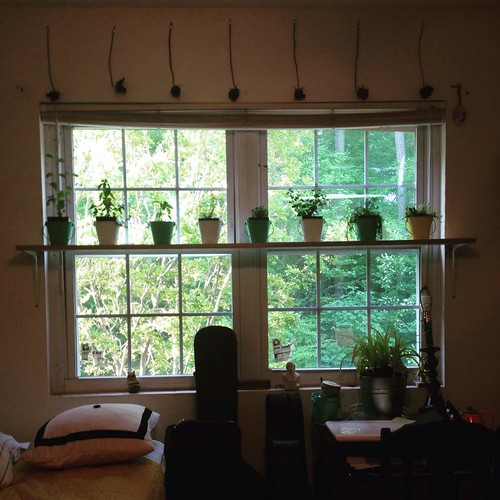 Herb Plant Shelf in Ana's Room (5-4-15)