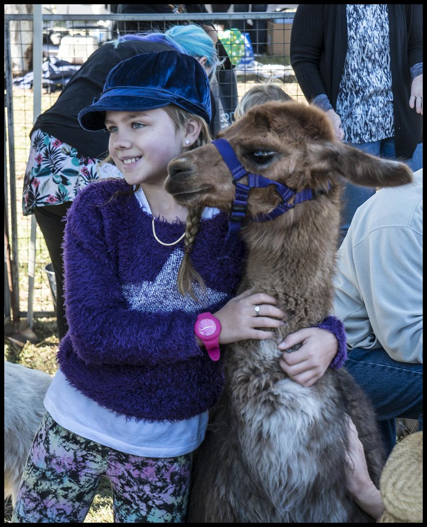 Young girl finds a friendly Alpaca-1=