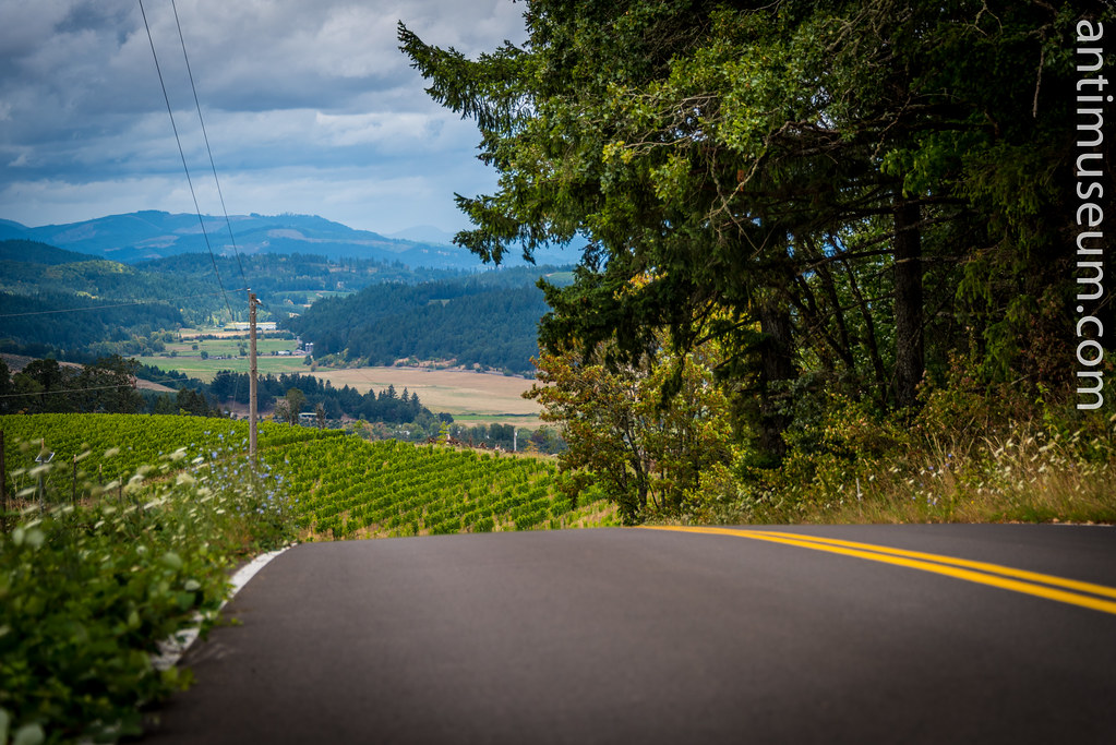 Vineyards in Oregon, Pacific NW, USA