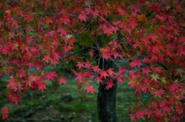 「秋飾り」 仁和寺 - 京都