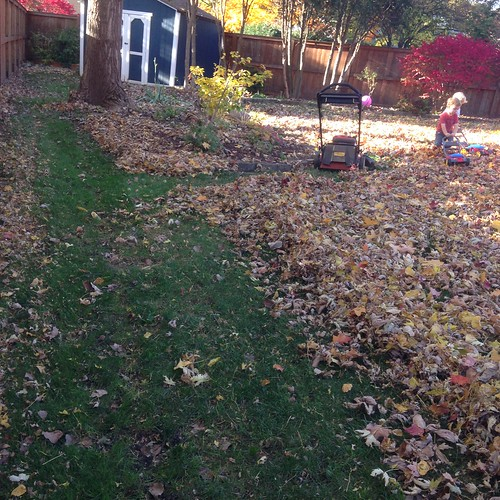 Mulching the Leaves