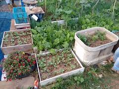 Horta Comunitária Cultivando o Futuro