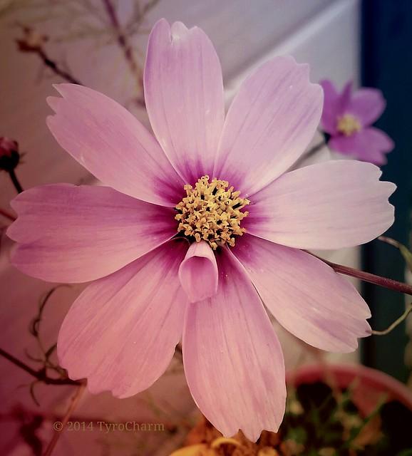 #flowers #floweroftheday #wildflowers #vintage #photography