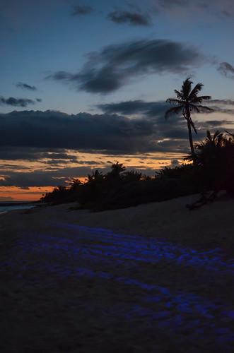 Disco Sunset