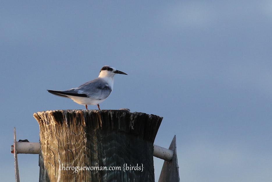 091514_bird21