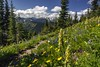 Pacific Crest Trail on Lakeview Ridge, Pasayten Wilderness