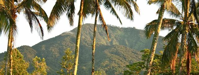 sarinbuana-ecolodge-Mount Batukaru