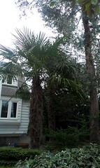 And more palms. Don't they know this is Portland?
