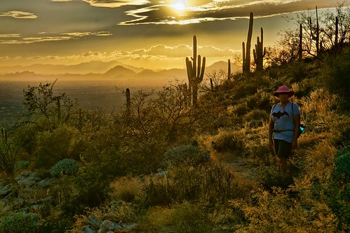 sunset arizona cactus desert tucson backlit saguaro santacatalinamountains babaddoag frogmountain turtleslava2014