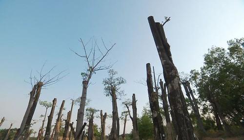 609樹木天堂樹木墳場