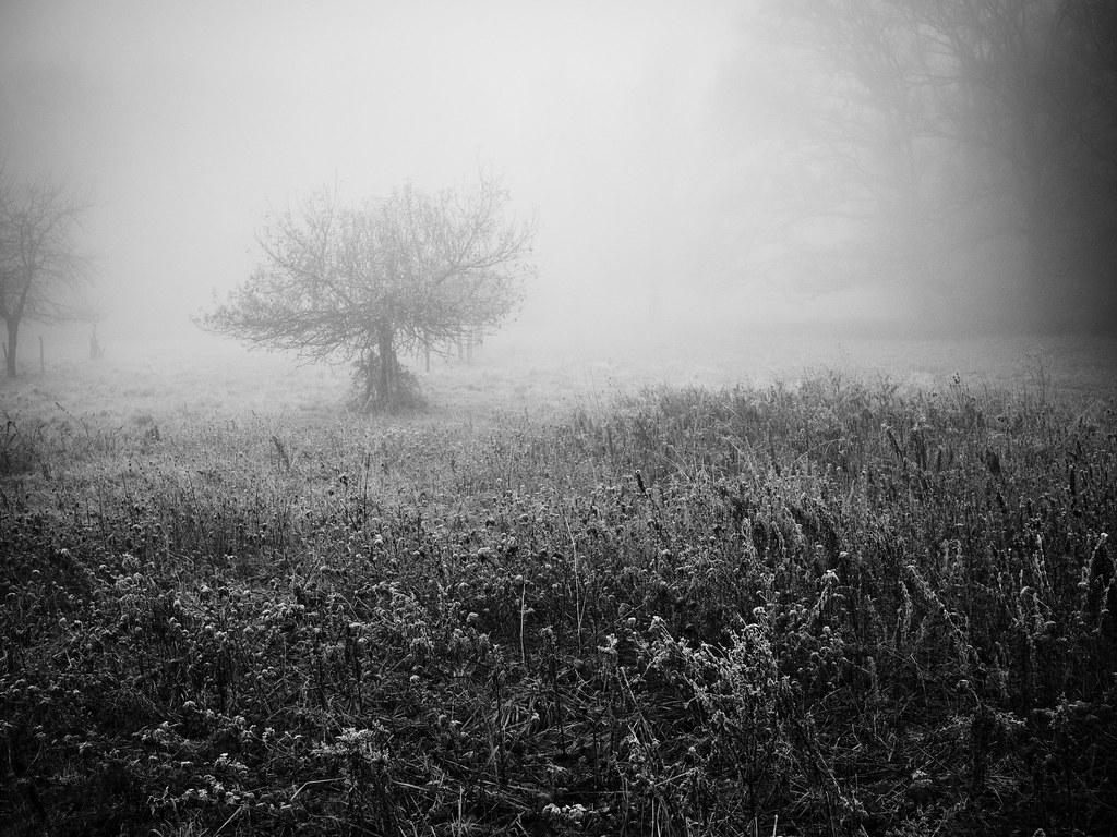 Fantômes un peu ces temps-ci 15903512459_f17c92ac07_b