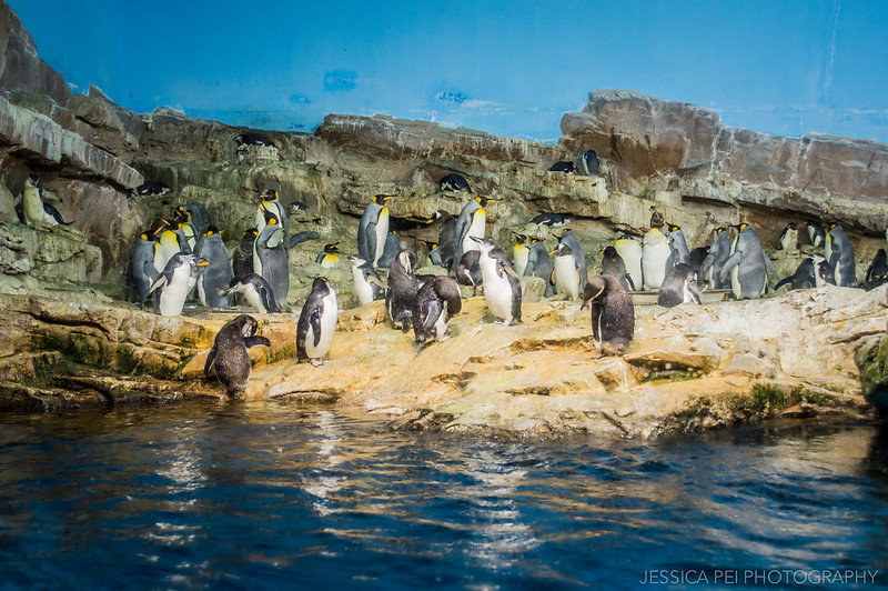Penguin Exhibit Sea World San Antonio Texas