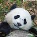 Bao Bao: always ready for her closeup by Sandra Parshall