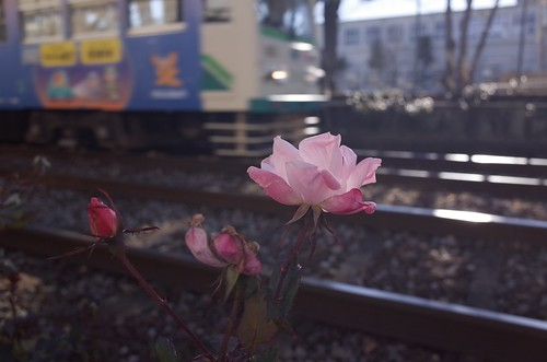 都電荒川線をめぐる冒険