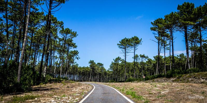 Strada per Torreira