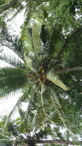 Bali-1-081