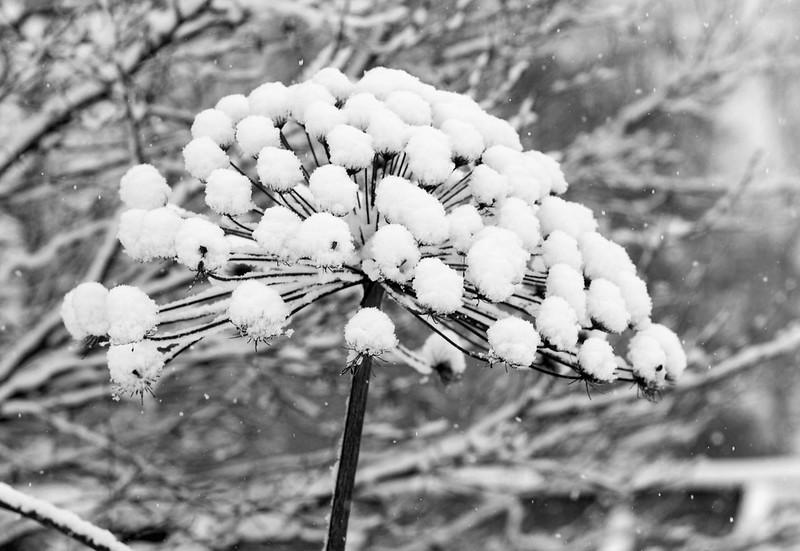 Snow Ball Umbrella