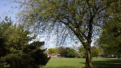 Sun shining at Kings Heath Park