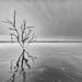 Stump Lake 2.2 by Jack Lefor