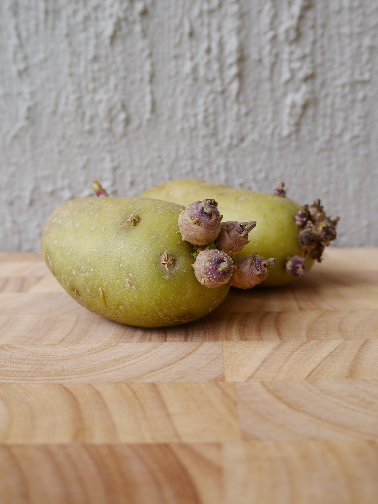 A poem a day - Haiku - Old potatoes