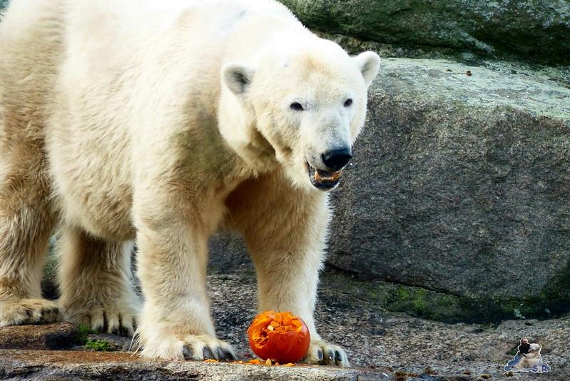 Zoo Berlin 07.12.2014 80