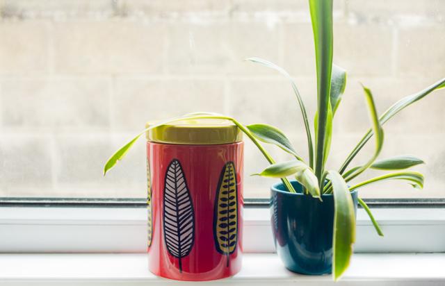 leaf pattern storage jar and plant