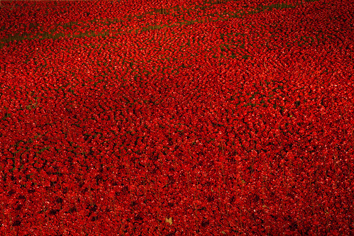 Sea of Ceramic Poppies at the Tower of London at Night