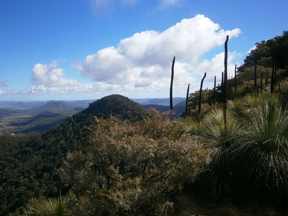 Mount Mitchell - Main Range National Park - QLD