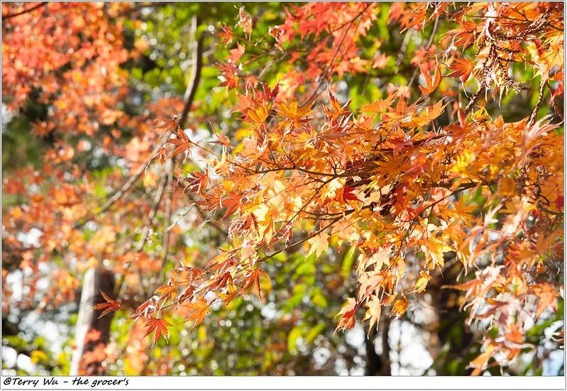 _2013-12 鎌倉八幡宮-21