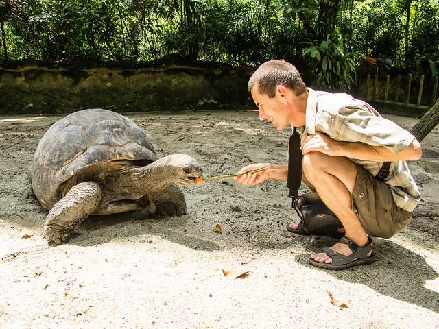 feeding Giant Aldabra Tortoise