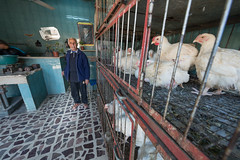 Old man selling chickens // Trip to Jordan